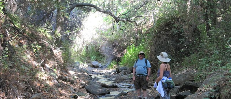 The Rustic Canyon Trail Runs Along Streambed